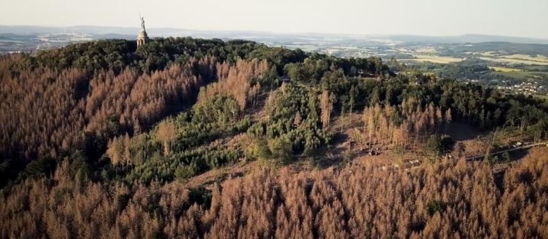 Die teils jetzt schon sterbenden Wälder rund um das Hermannsdenkmal in Herbstlaubfarben