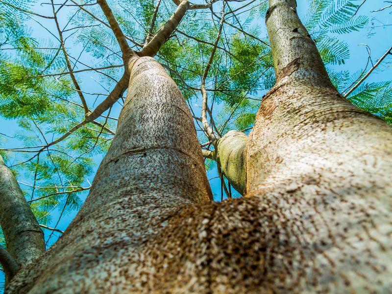 Blick in die Baumkronen vor einem blauen Himmel